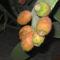 2009 op.termések