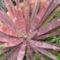 2009 yucca