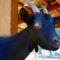 Fekete kecske