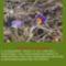 Sár-hegyi védett növényeink 10
