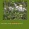Sár-hegyi védett növényeink 12