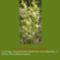 Sár-hegyi védett növényeink 14
