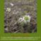 Sár-hegyi védett növényeink 18