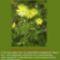 Sár-hegyi védett növényeink 19