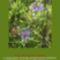Sár-hegyi védett növényeink 1