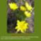 Sár-hegyi védett növényeink 4