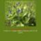 Sár-hegyi védett növényeink 5