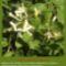 Sár-hegyi védett növényeink 6