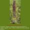 Sár-hegyi védett növényeink 7