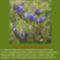 Sár-hegyi védett növényeink 8