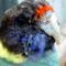 Színes kakadu