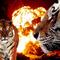 Tigris és tűz