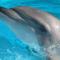 dolphin42