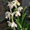 Hidegházi orchideám