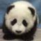 Pandabocs