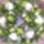 Koszoru-001_464612_18622_t