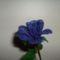 Kék rózsa0
