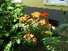 Nyalka virágos udvarai 29