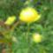 vadvirágok a Raxon 11