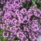 vadvirágok a Raxon 12