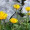 vadvirágok a Raxon 13