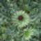 vadvirágok a Raxon 14