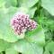 vadvirágok a Raxon 1