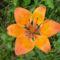 vadvirágok a Raxon 2