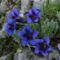 vadvirágok a Raxon 3