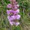 vadvirágok a Raxon 4