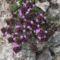 vadvirágok a Raxon 5