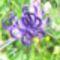 vadvirágok a Raxon 7