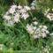 vadvirágok a Raxon 8