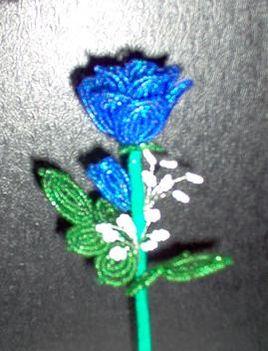 Barátnőm kék rózsája