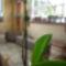 orchim és az virágszál, azóta már kicsit nagyobb