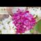 Koszorúslányok virágai