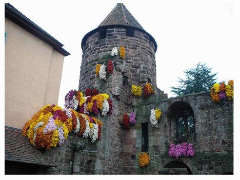 krizantén fesztivál Lahr-ban Németországban 5
