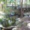 mini őserdő