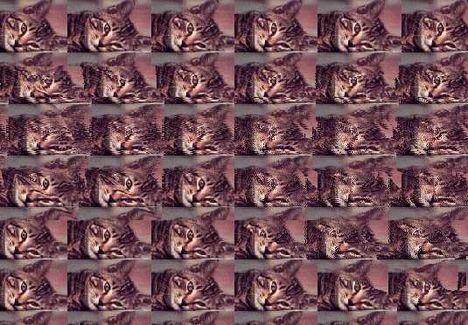 Mit látsz a képen?