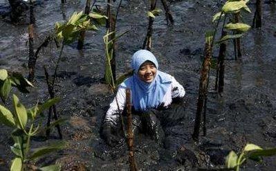 indonéz diák önkéntes mangrove fát ültet