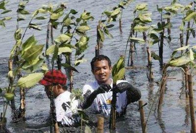 közösségi szolgálat mangrove