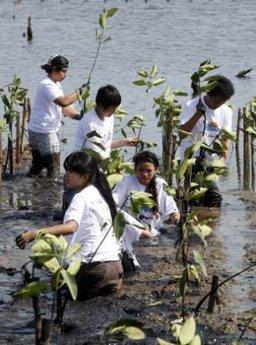 mangrove ültető diákok