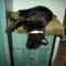 Kormi úr alszik