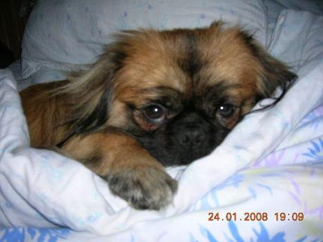 A Mami ágyában