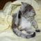 Legkedvesebb cicánk Dömike:)
