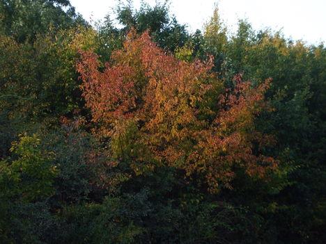 Őszi színkavalkád 11