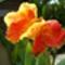 ramada_flower