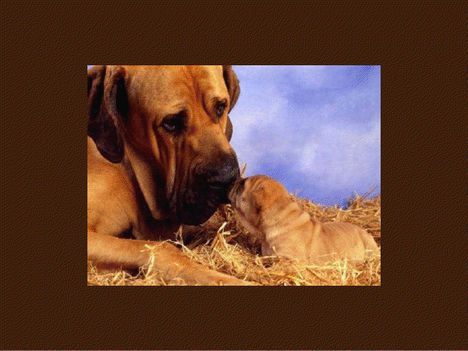 Állati szeretet 14
