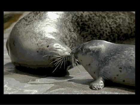 Állati szeretet 25