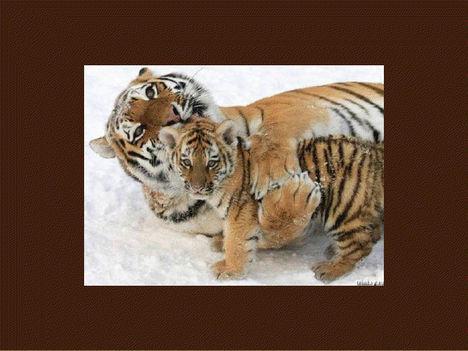 Állati szeretet 13